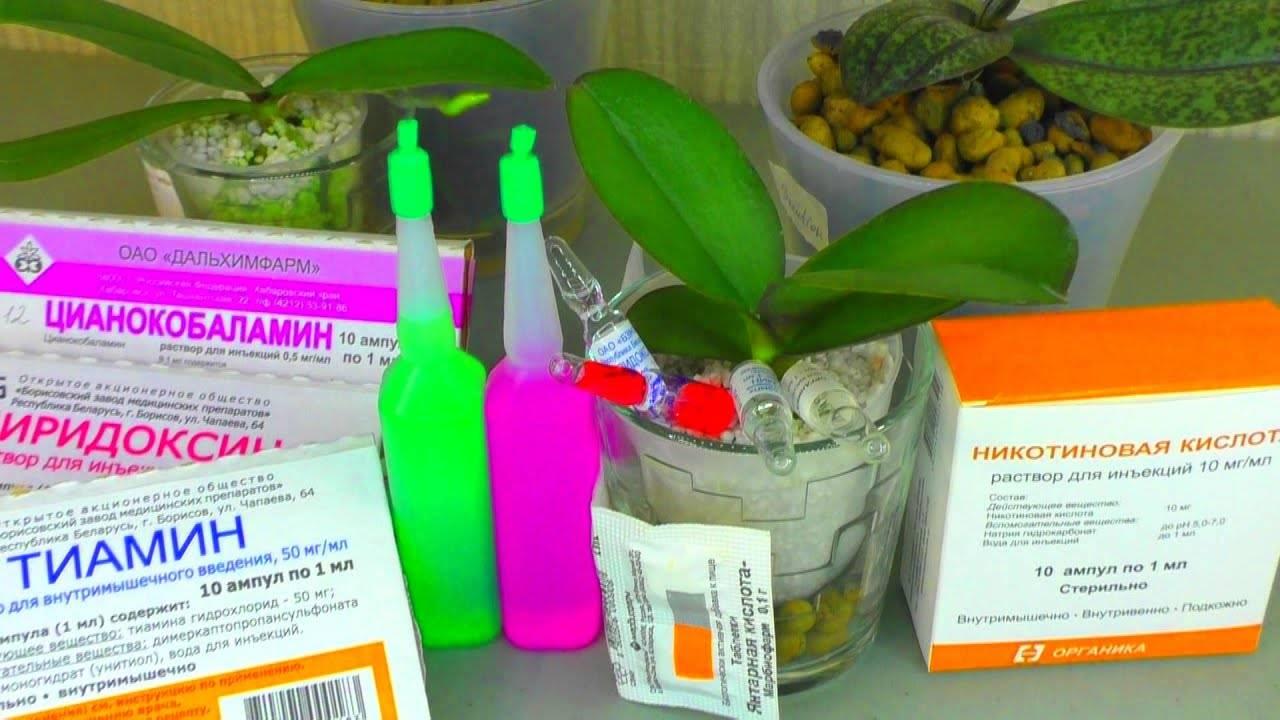 Витамины для орхидей: состав коктейля и применение группы в в домашних условиях, частота удобрения, показания и противопоказания