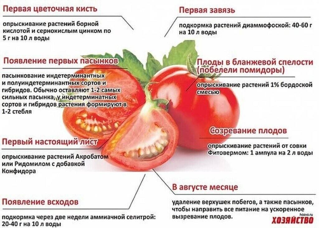 Как выбрать самое лучшее удобрение для рассады и тепличных томатов и не ошибиться: топ лучших средств этого года
