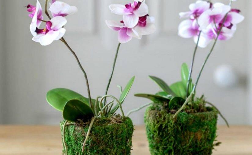 Уход за орхидеями в домашних условиях: всё об орхидеях