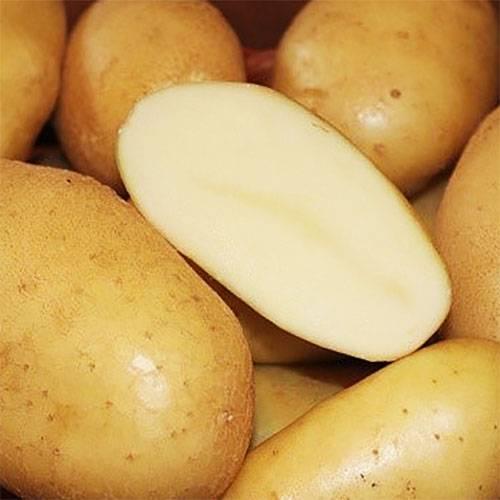Рекомендуемые для выращивания сорта картофеля