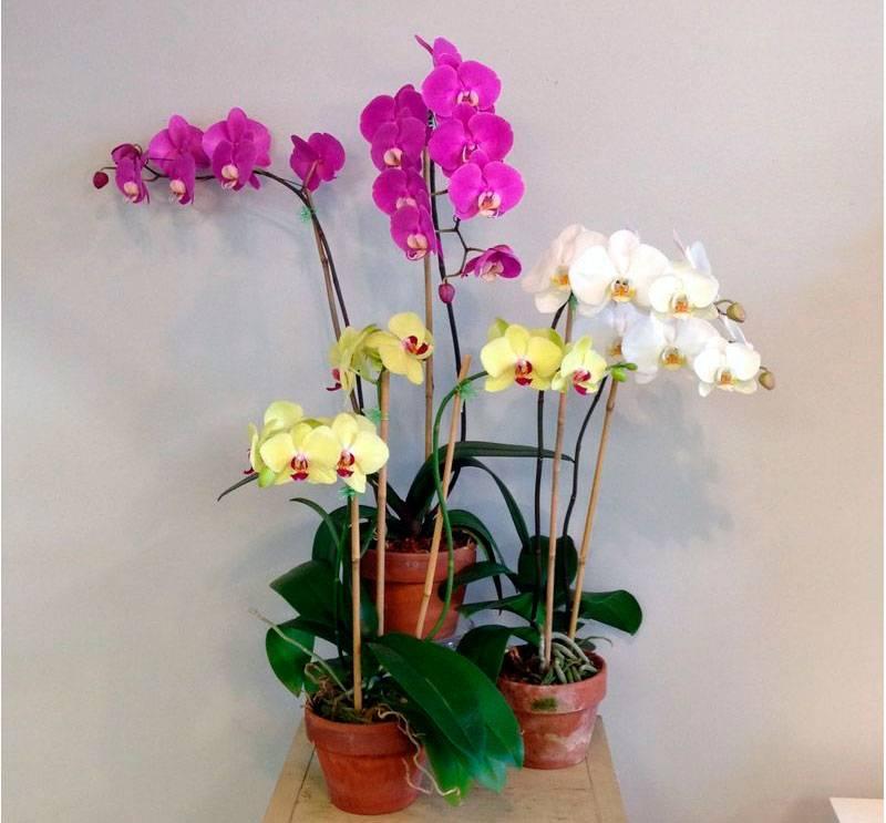 Янтарная кислота для орхидей: правила использования, инструкция как разводить и применять