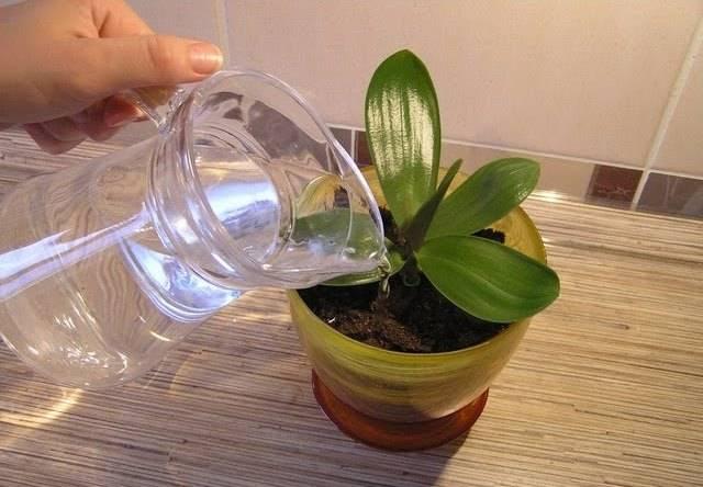 Янтарная кислота для орхидей – как разводить и применять