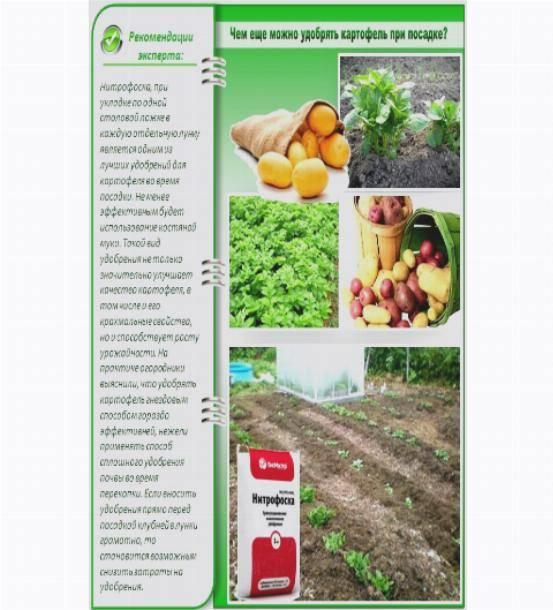 Какие вносить удобрения для картофеля при посадке в лунку весной?