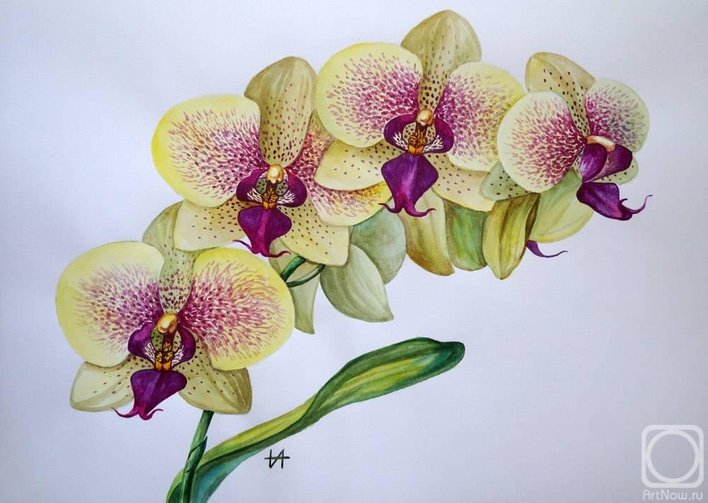 Желтая орхидея фаленопсис: фото сортов растения, особенности ухода и пересадки русский фермер