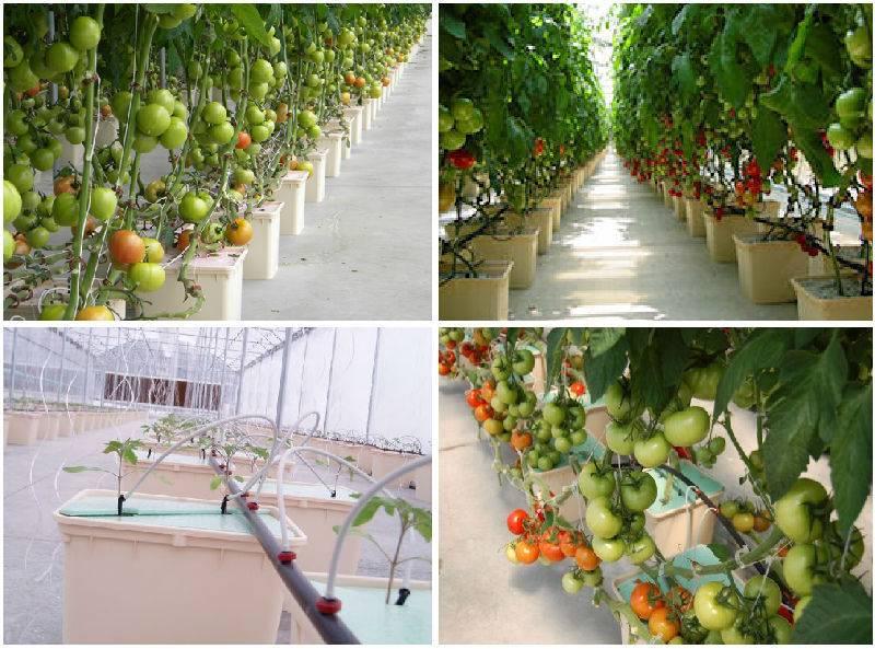 Гидропонные установки для выращивания томатов купить в москве