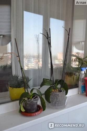 Как обработать орхидею актарой: как правильно развести вещество, а также меры безопасности и аналоги препарата русский фермер