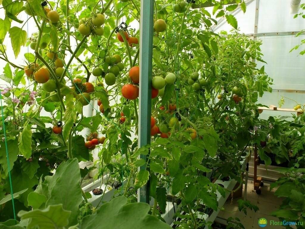Технология выращивания огурцов и томатов на гидропонике - дачник