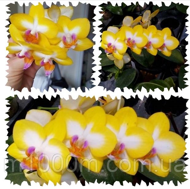 Великолепные красные орхидеи: сорта и фото