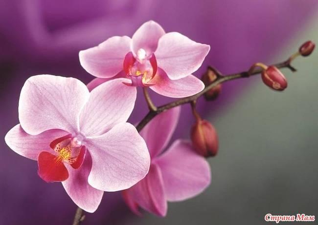 Витамины в 12 для орхидей
