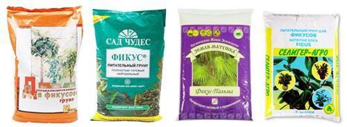 Земля для фикуса: какая почва нужна для выращивания комнатного фикуса в домашних условиях? состав грунта. подойдет ли универсальный?