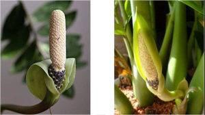 Ядовитые комнатные растения | компетентно о здоровье на ilive