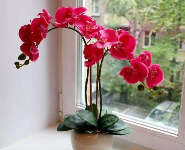 Уход за фаленопсисом после покупки в домашних условиях: что делать — selok.info