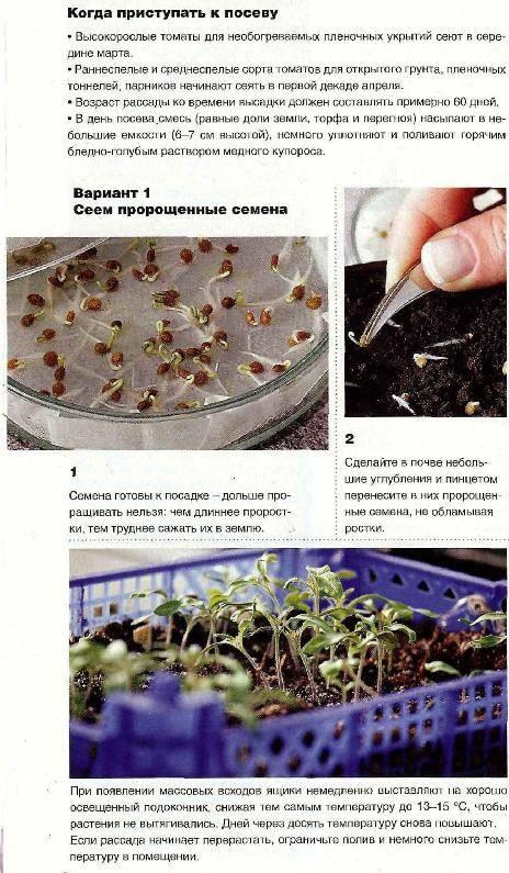как долго всходят семена кохии