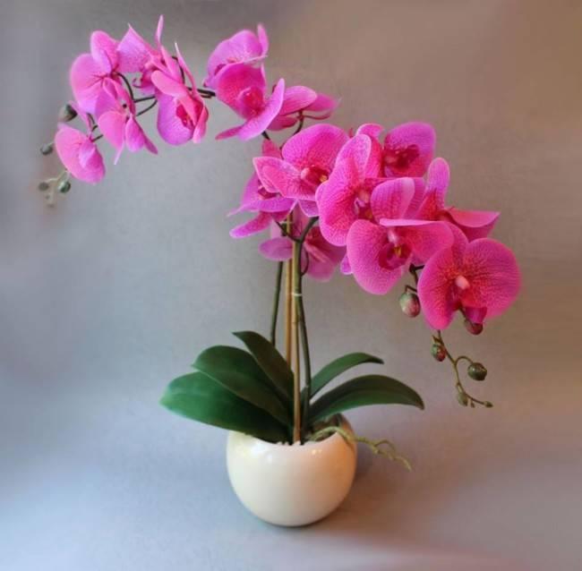 Подробно расскажем про полив и уход за орхидеей в домашних условиях