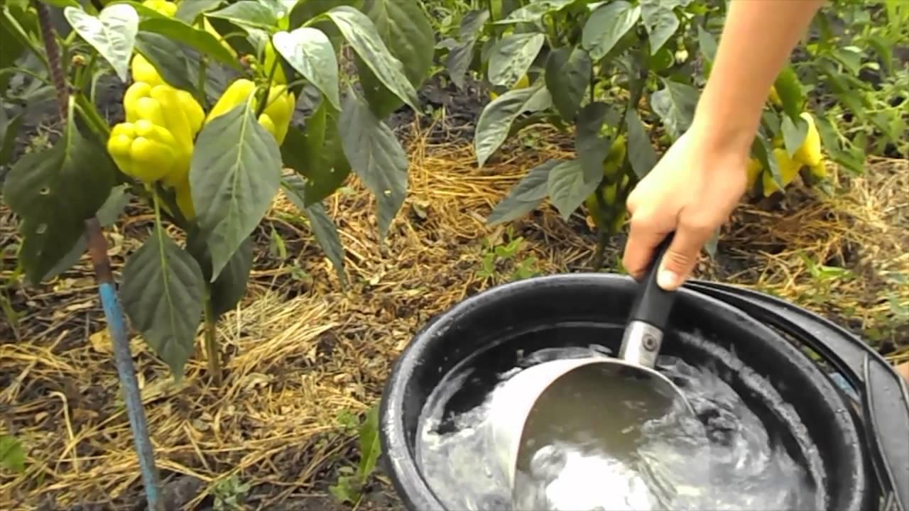 Чем подкормить помидоры во время цветения: правила подкормки цветущих томатов, когда удобрять, чтобы набрали цвет и зацвели быстрее, удобрения для бутонизации