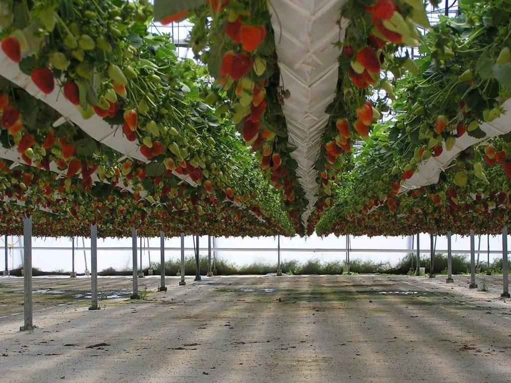 Выращивание томатов с использованием технологии гидропоники