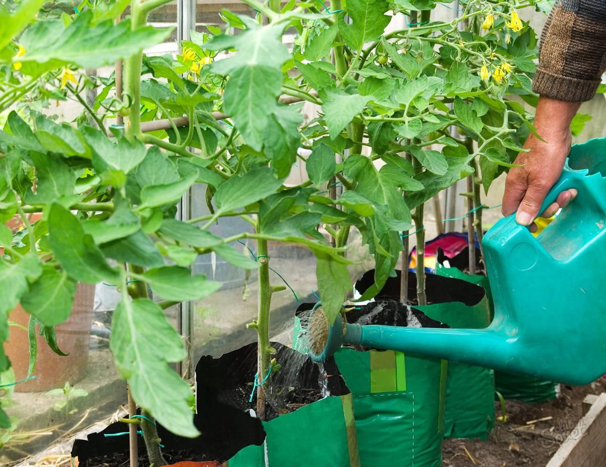 Чем подкормить помидоры: увеличиваем урожаи вдвое
