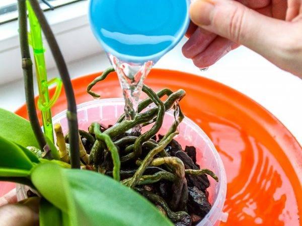 Как сделать в домашних условиях витаминный коктейль для орхидей