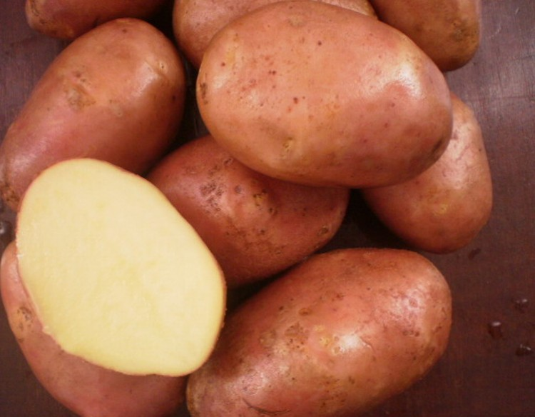 Посадка картофеля семенами на рассаду: сроки когда сеять семена с пошаговой инструкцией
