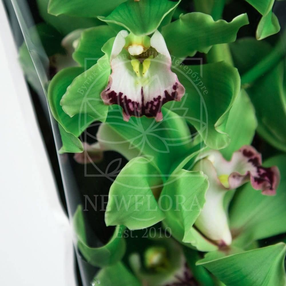 Зеленая орхидея: основные сорта цветка, их фото в горшках, особенности ухода, вредители и болезни русский фермер