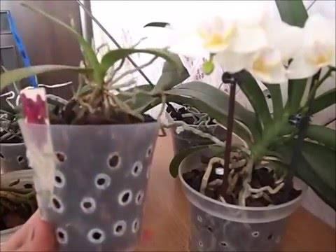 Уход за орхидеей в зимний период: как ухаживать за ней зимой в домашних условиях, если она стоит на подоконнике? оптимальная температура для орхидеи. можно ли ее перевозить?