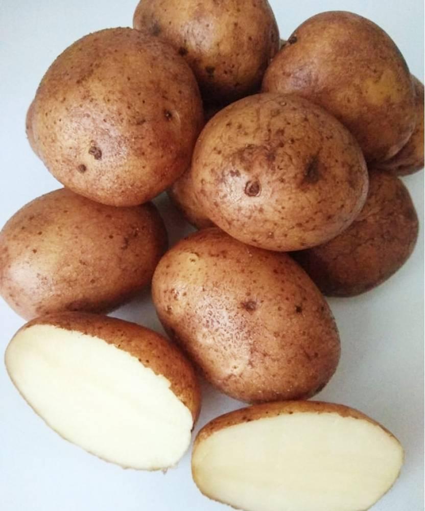 Посадка картофеля семенами на рассаду от а до я