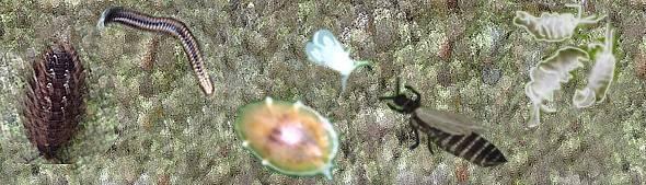 Вредители орхидей: фото и названия, как бороться с ними, чем обрабатывать от белых, черных, насекомых, как проводить лечение, фото