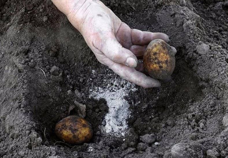 Как удобрить почву под картофель при посадке?