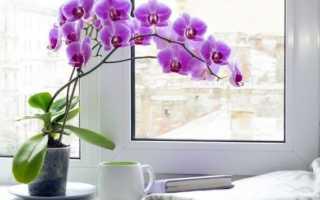 Как ухаживать за орхидеей в домашних условиях после покупки в магазине: что делать с только что купленным цветком, как пересаживать, поливать и подкармливать растение, фото и видео от цветоводов любителей