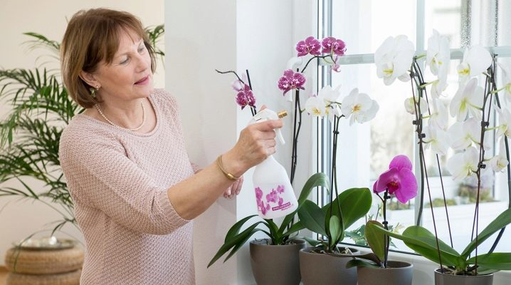 Как спасти орхидею без корней и с вялыми листьями: правильная реанимация сухой и повреждённой корневой системы