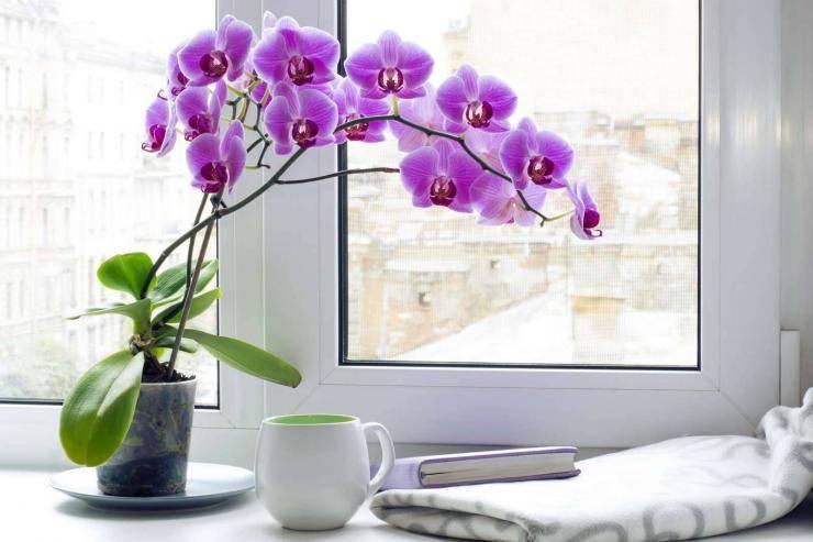Уход и выращивание орхидей в домашних условиях: видео о том, как правильно организовать уход за ними