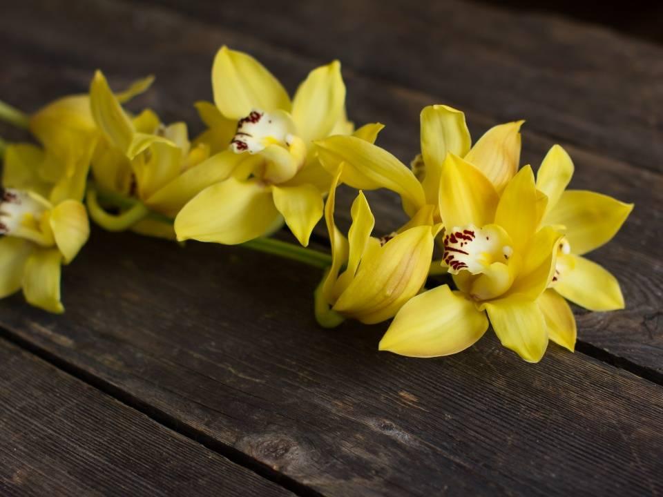 Орхидея желтая: разновидности и фото цветка с желтой окраской - фаленопсис, nebula, розовый wild peach с желтой крапинкой, посадка и уход в горшке