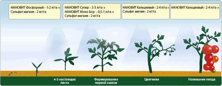 суперфосфат двойной применение для рассады томатов