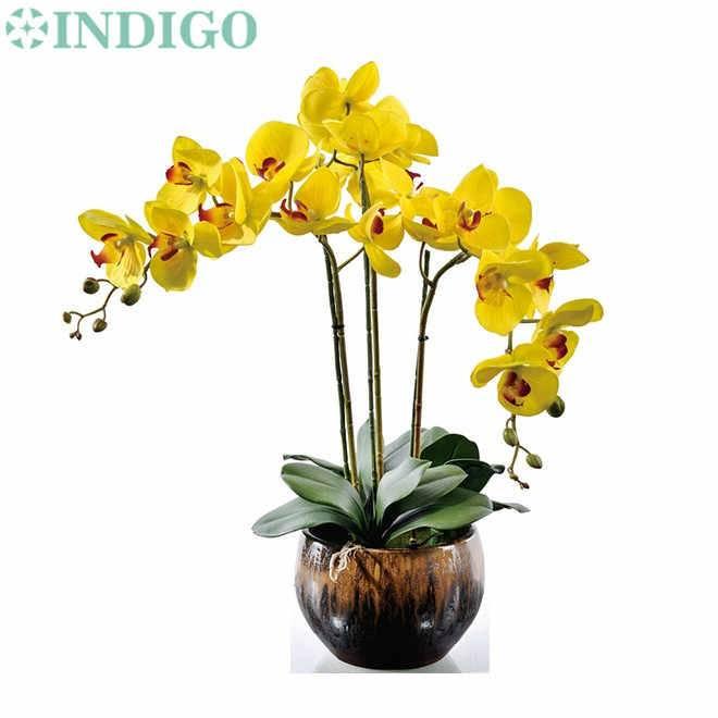 Желтая орхидея: описание вида и его сортов, фото растений в крапинку, просто лимонного цвета и других, а также особенности ухода и размножения selo.guru — интернет портал о сельском хозяйстве