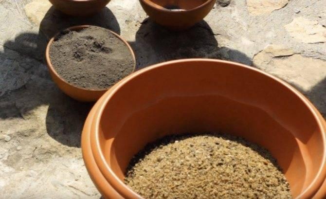 Как посадить фикус отростком: пошаговая инструкция