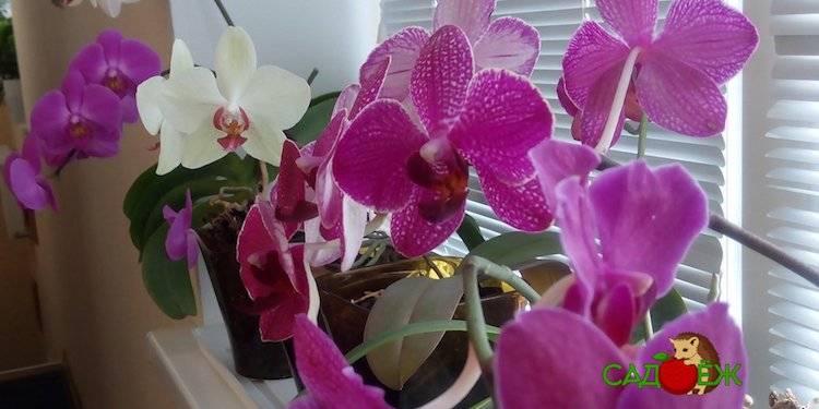 Чесночная вода для орхидей: почему так полезна эта подкормка, рецепты изготовления, а также готовые инструкции по правильному проведению полива selo.guru — интернет портал о сельском хозяйстве