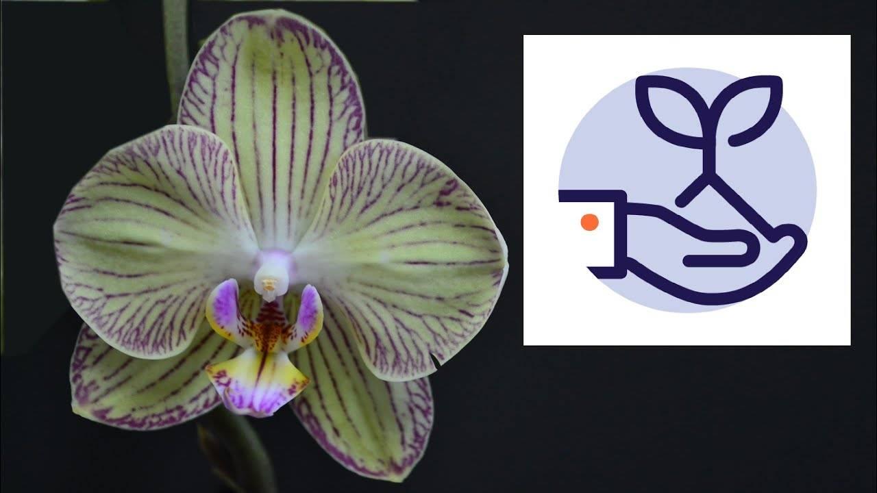 Адаптация орхидеи после покупки в домашних условиях. полезные советы для начинающих цветоводов
