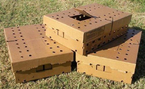 Фото коробки для перевозки индюшат